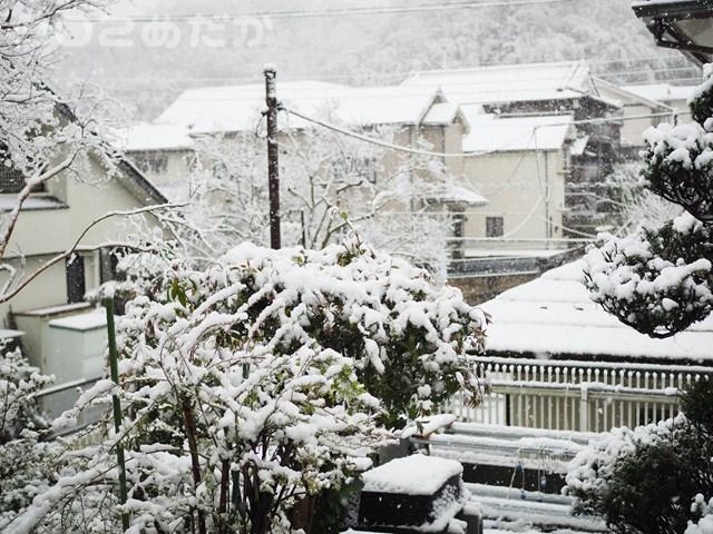 東京でも雪。。メダカ頑張れ