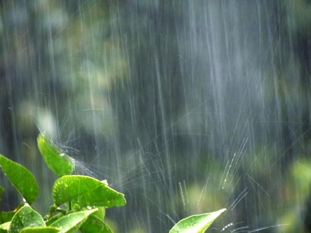 大雨って困りまする
