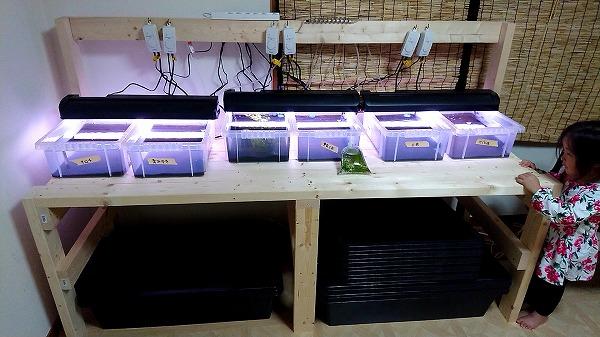 メダカ室内繁殖で使うおすすめの照明をご紹介